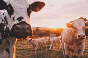 3 Reasons the Local Food Movement is Gaining Ground