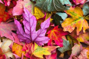 Reasons to Fall in Love with Autumn