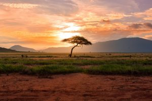 A Third of African Tropical Plants at Risk of Extinction