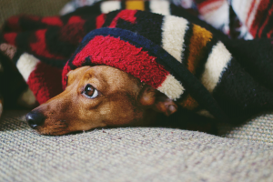 The Most Common Dog Phobias and How to Cope With Them